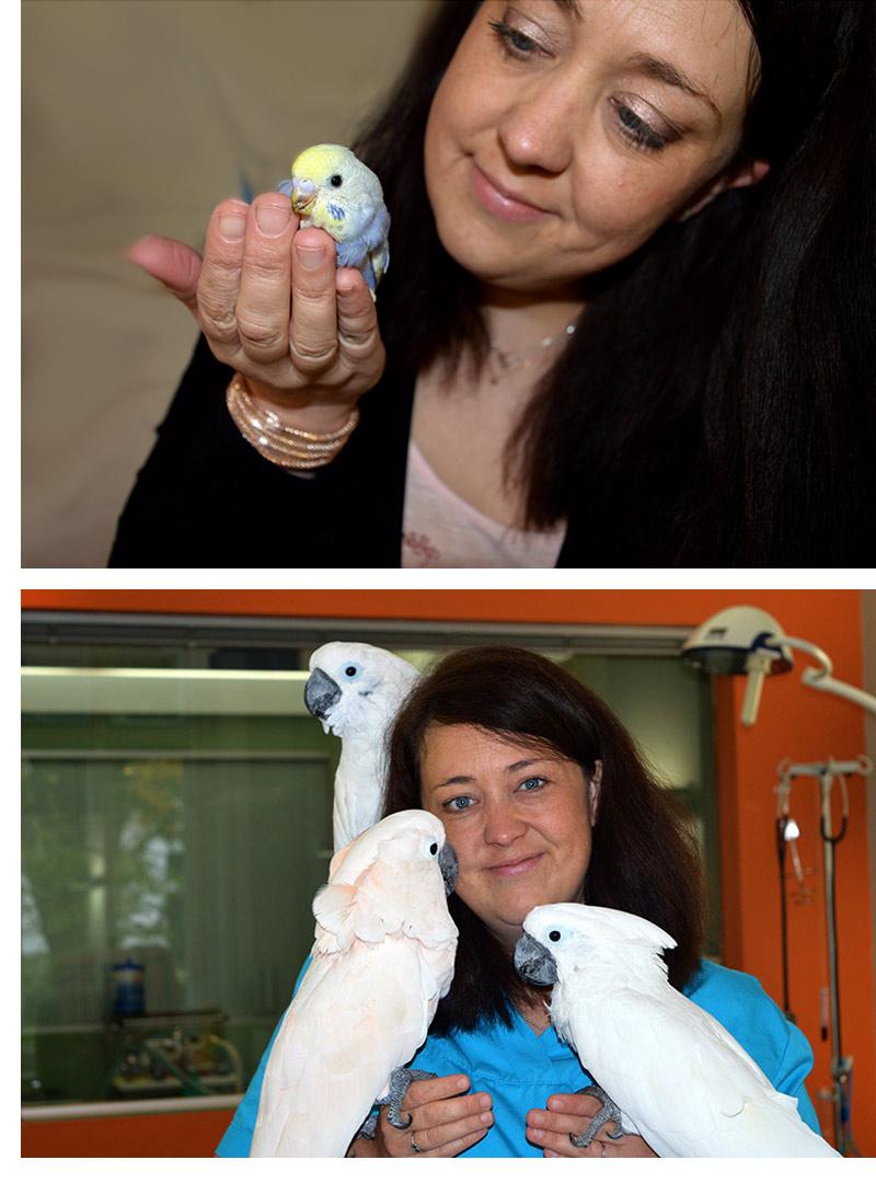 dr-schmook-vogelgaleria